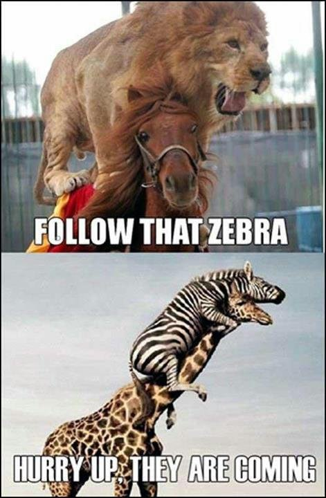 follow that zebra. this is description.. follow that repost