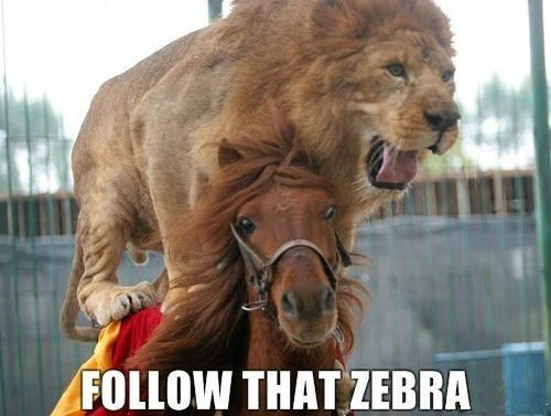 follow that zebra. posted it accidentally on anomys.