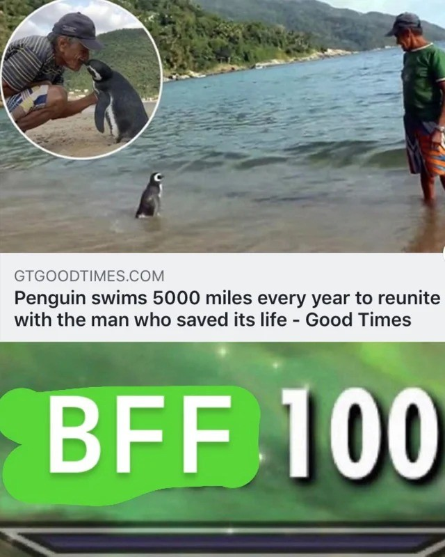 friends. .. Not to be a downer, and I am sure the Penguin does recognize him and likes him too of course, but I find it more likely that it's just runs into him when migrat