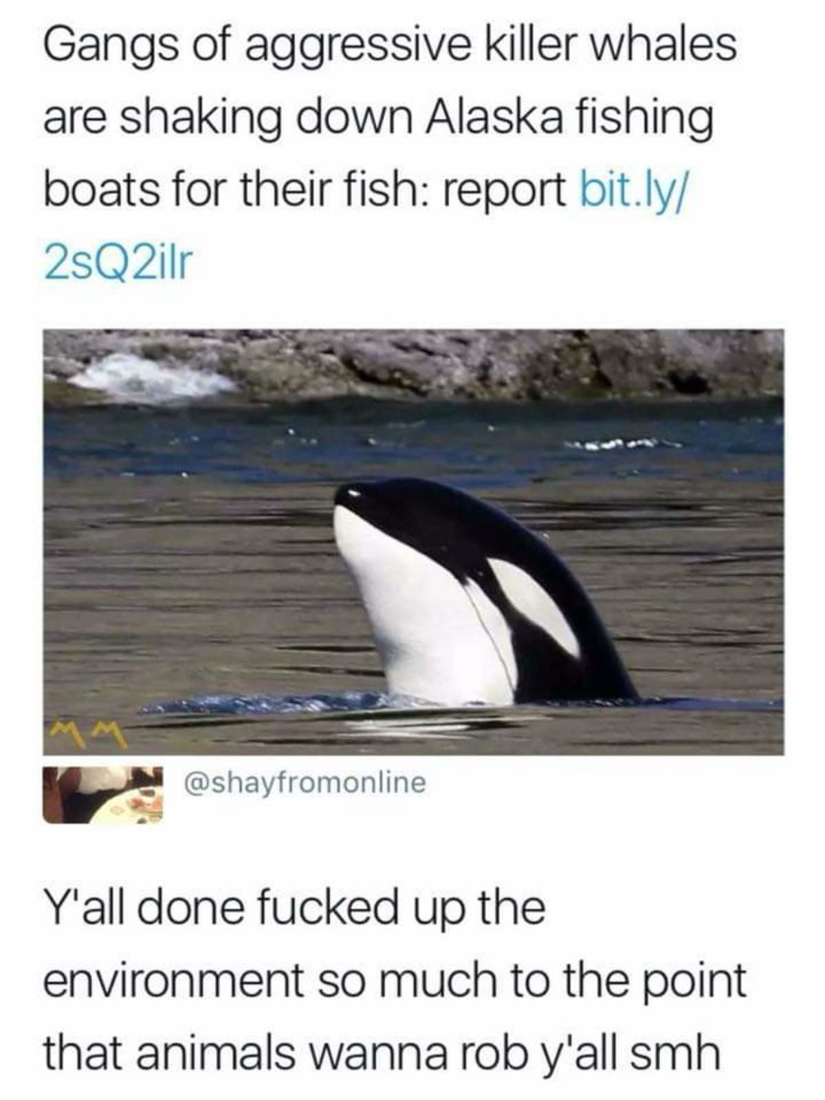 Gangster whales. .. Of course it's the ones that are black