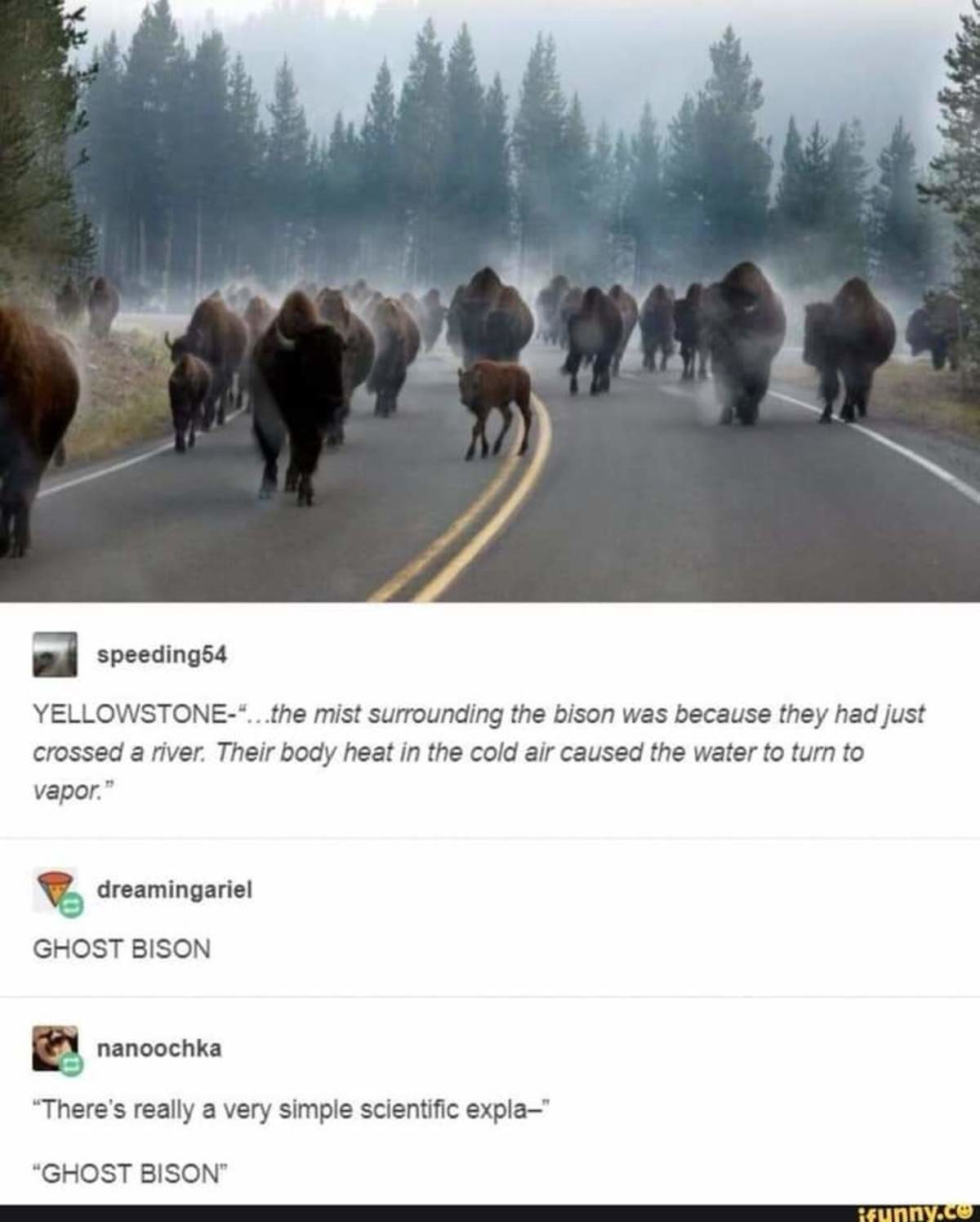 Ghost Bison. Honestly they killed so many bison all at once that if they came back as ghosts it's be goddamn terrifying.. Hey, that's not just a small pile of bison! It's a buffaload!