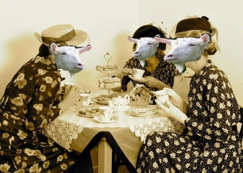 Goat-tea Party. .