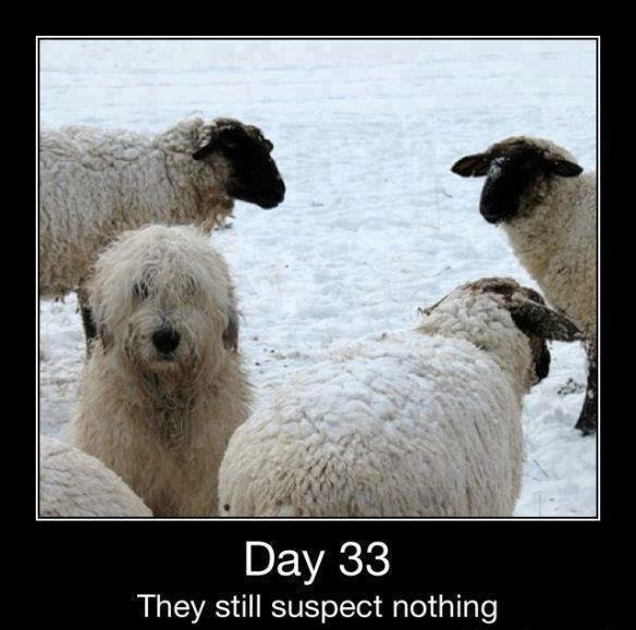 Good job!. . Day 33 They still suspect nothing