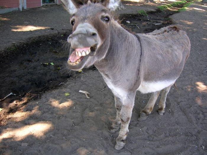 Goofy Donkey. .. what an ass
