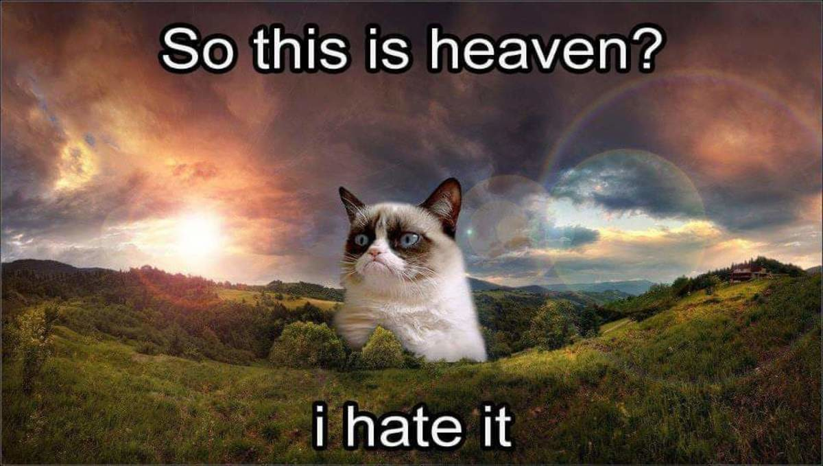 Grumpy cat was all of us. RIP you little .. My moms dog died this morning, she loved her alot. Grump cat dying is overshadowing her Facebook posts about her dog and I feel like bad about that