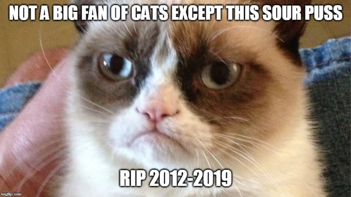 grumpy cat. .. 2012 - 2019? That's only 7 years old.. sad day.