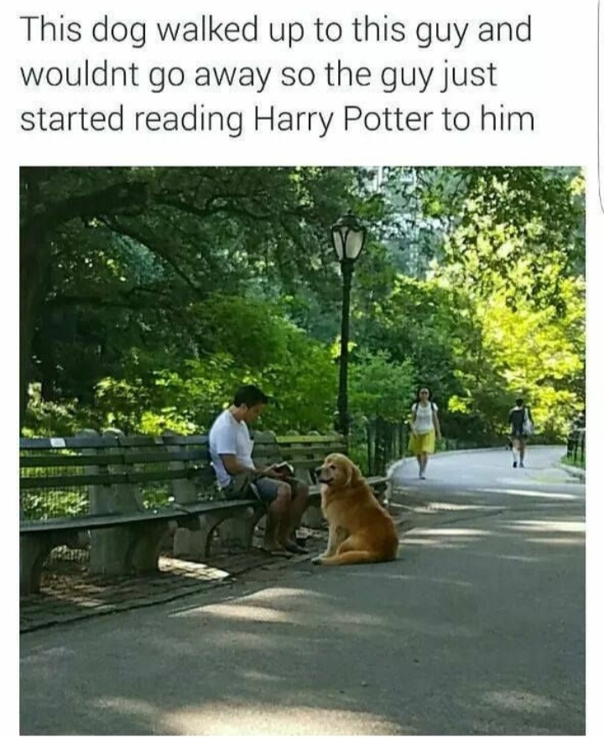 Hairy Potter. Your pets like it when you talk to them, don't hesitate.. Your kids also like ot when you talk to them, until they are like 3 years old.
