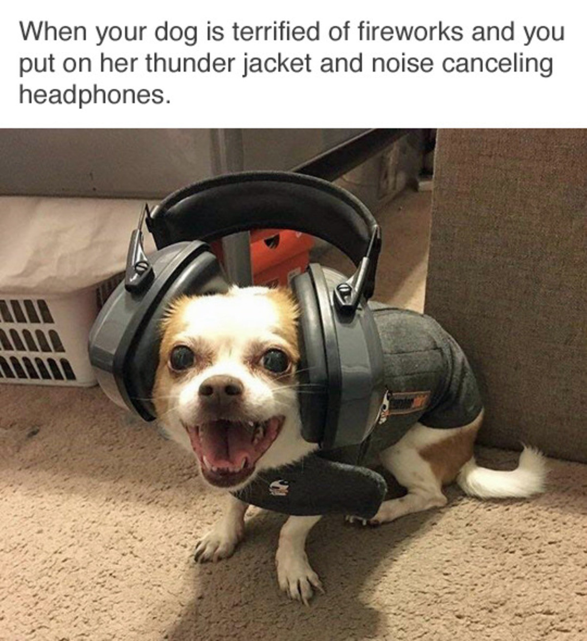 Happy New Years Doggo. . when your 'lilili: is terrified '' fireworks !l, lititz' d Fii, , put on her thunder jacket noise canceling headphones.. He looks like a god damn army soldier.