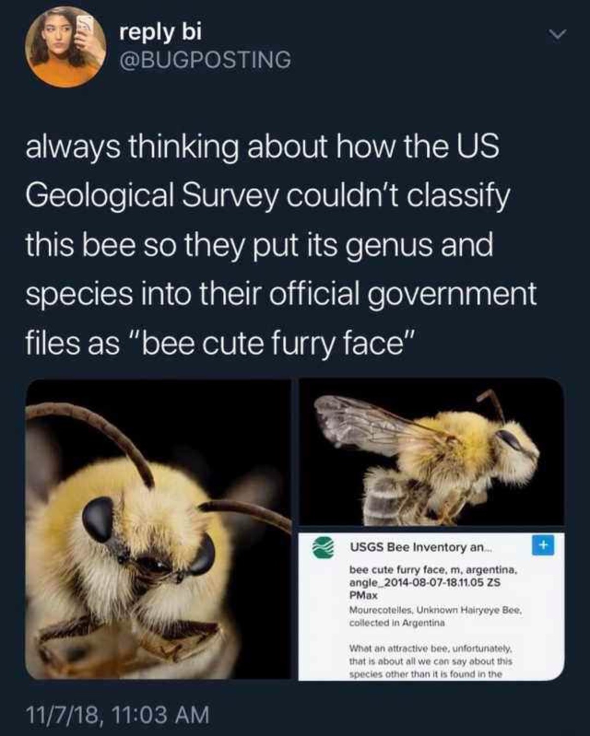 """hes looking fresh tho. .. """"what an attractive bee"""" I didn't realize the government was full of furries"""