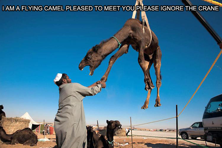 """Hi there Mr. Camel. ...Ignore the crane<br /> Thanks for getting this on top FJ. I AM A FLYING CAM EL PLEASED TD MEET ' -'} EASE IGNORE THE CRANE. Its more so looks like the camels saying, """"ILL U IN THE BUTT IF I WASNT STUCK"""""""