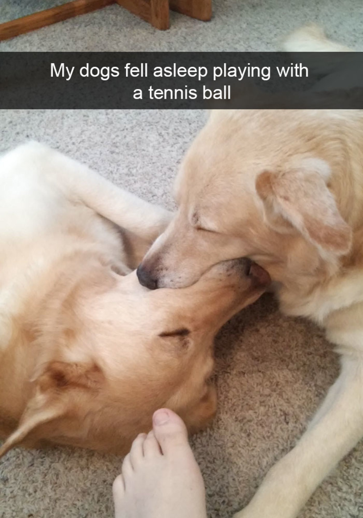 Hilarious Dog Snapchats. join list: CuteDogs (242 subs)Mention Clicks: 4485Msgs Sent: 28713Mention History. My dogs fell asleep playing with a tennis ballEvery