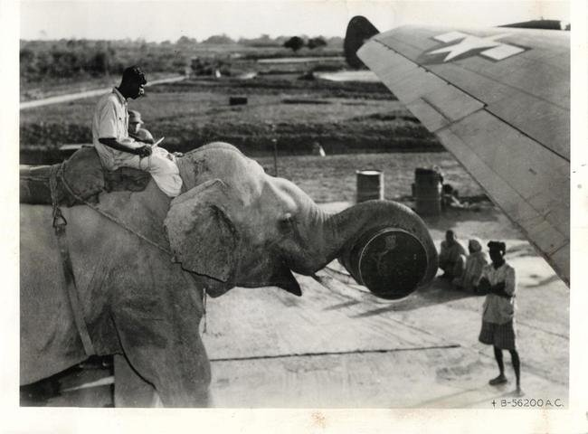 Historical Images Comp 1. An elephant is used to load supplies onto an American plane.  A US Marine, somewhere in the Pacific Islands, poses for the camer