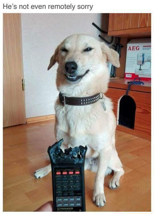 History. .. Bad dog!