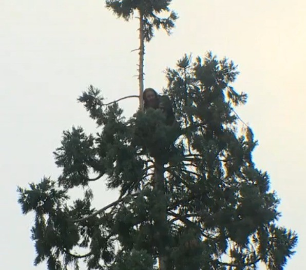 Hobo in a tree - Live!. There is a hobo in a tree somewhere and you can watch it live. .. If he falls does he have 8 lives left?