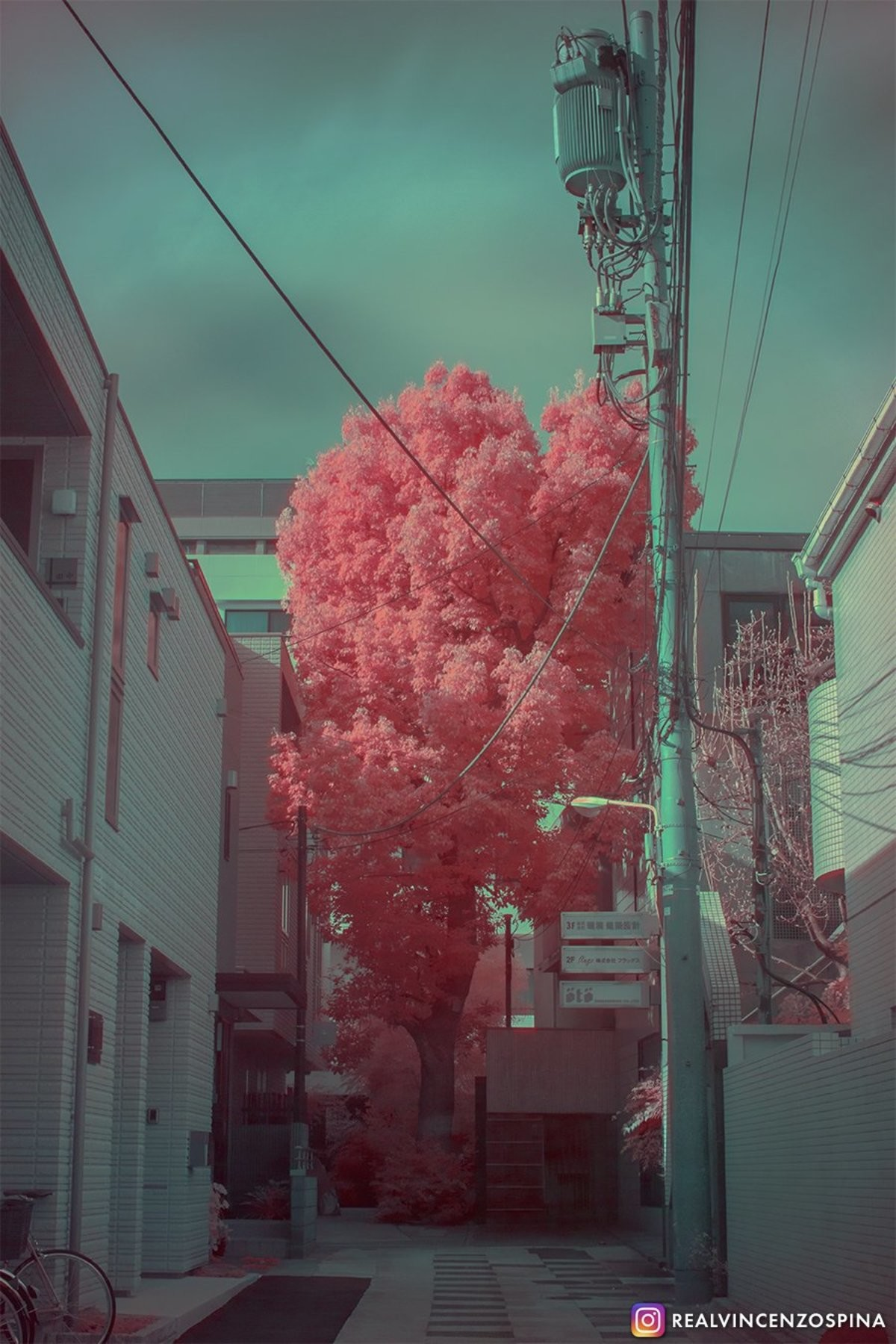 infrared photos. . ill. Excited Bee Noises
