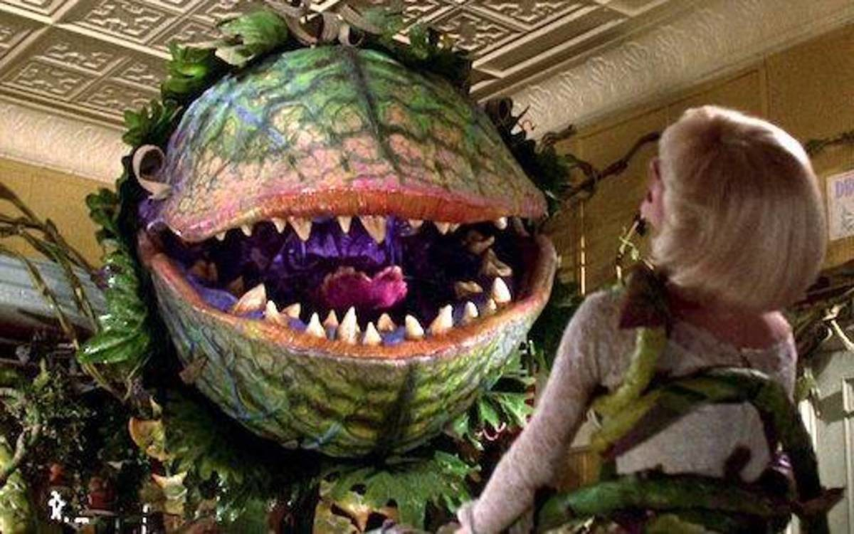 irrational childhood fear. What's everyone's irrational childhood fear? I was terrified of Audrey II, the little shop of horrors Triffid. Made me scared of Pete