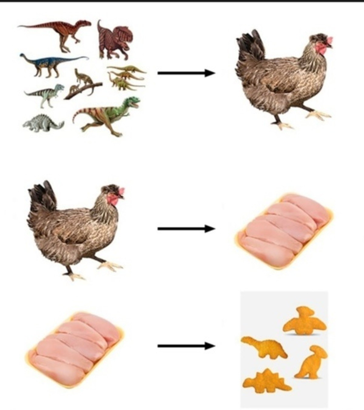 It's evolution baby. .. 1 chicken has 5 breasts in it and comes from 12 dinosaur