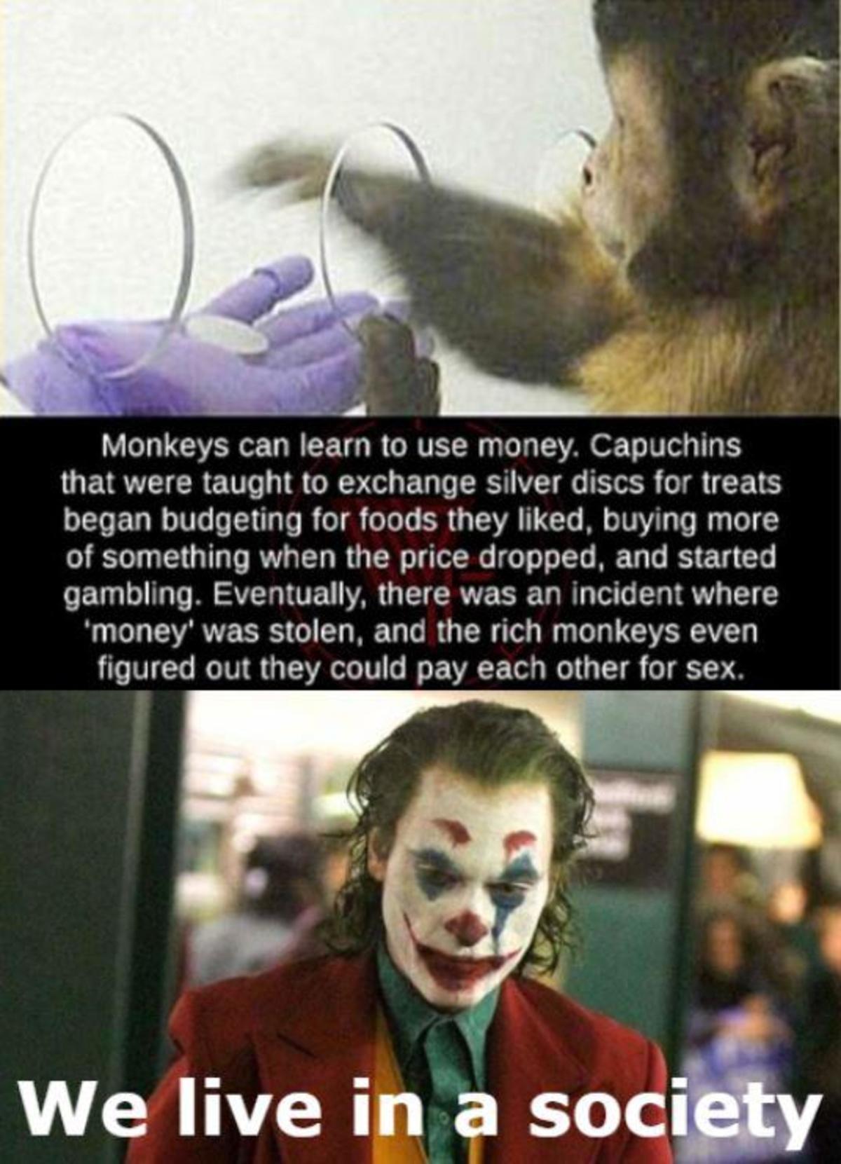 just like us... .. >teach monkeys how to use money >create mini chicago