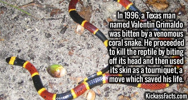 Kickass Fact Comp #30. http://articles.latimes.com/1996-05-12/news/mn-34241coral-snake http://www.nydailynews.com/sports/football/giants/story-boy-named-tom-bra