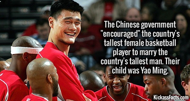 Kickass Fact Comp #51. http://www.smh.com.au/news/basketball/yao-ming-the-basketball-giant-made-in-china-by-order-of-the-state/2006/01/18/1137553645228.html?3 h