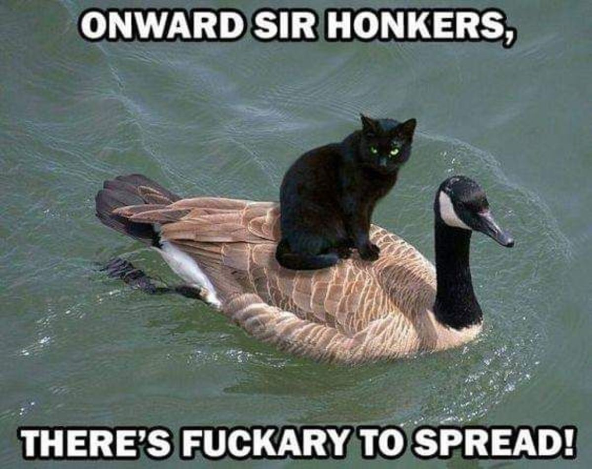 Kitty on a ducky. .. hsdfngdslmcg rolled user bonezo There's to spread, are you in or out?