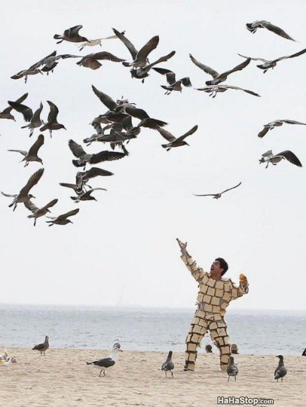 Lord of the Birds. source: in content subscribe for more.