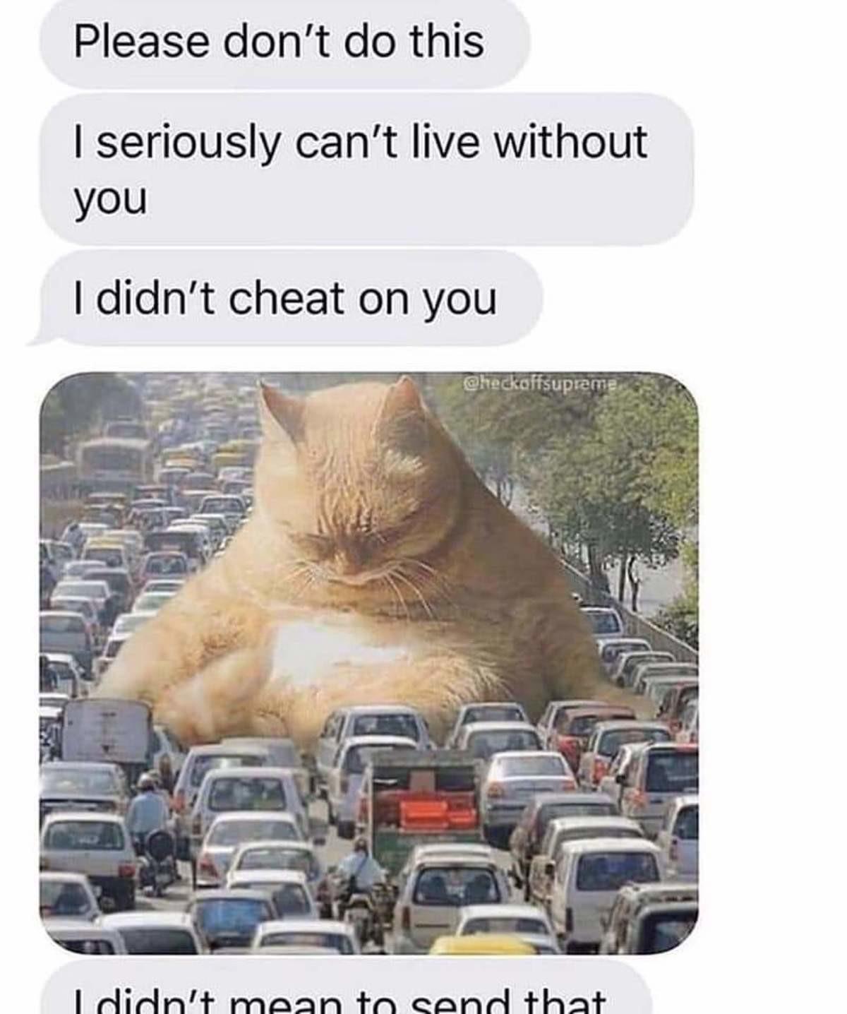 Love. .. Cats fw