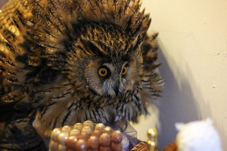 Majestic Creature. Ladies and Gents: Your totem of Wisdom!.. It's too bad they make such bad pets. Owls are cool birds.