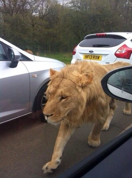 Making my way downtown. .. Clearly someone is playing Jumanji.