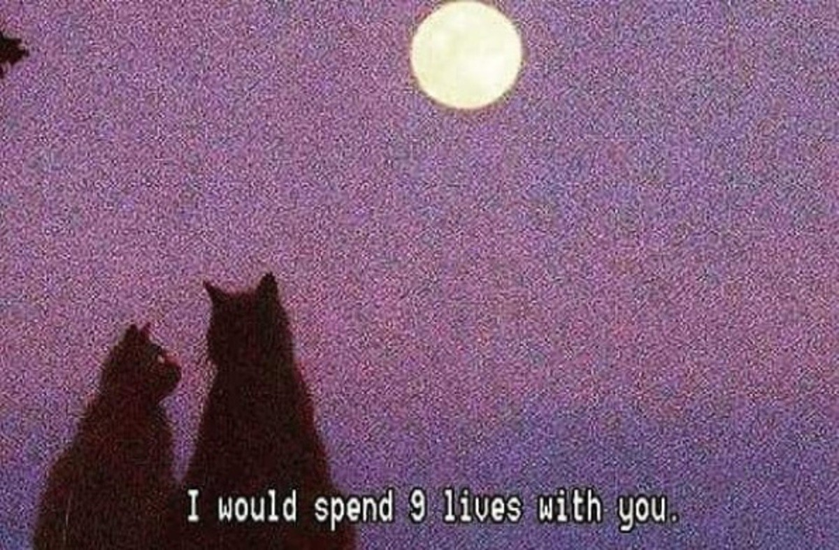 MeoW. . I would spend (i) liees with gou.. AND I WOULD SPEND 9 LIVES MORE!