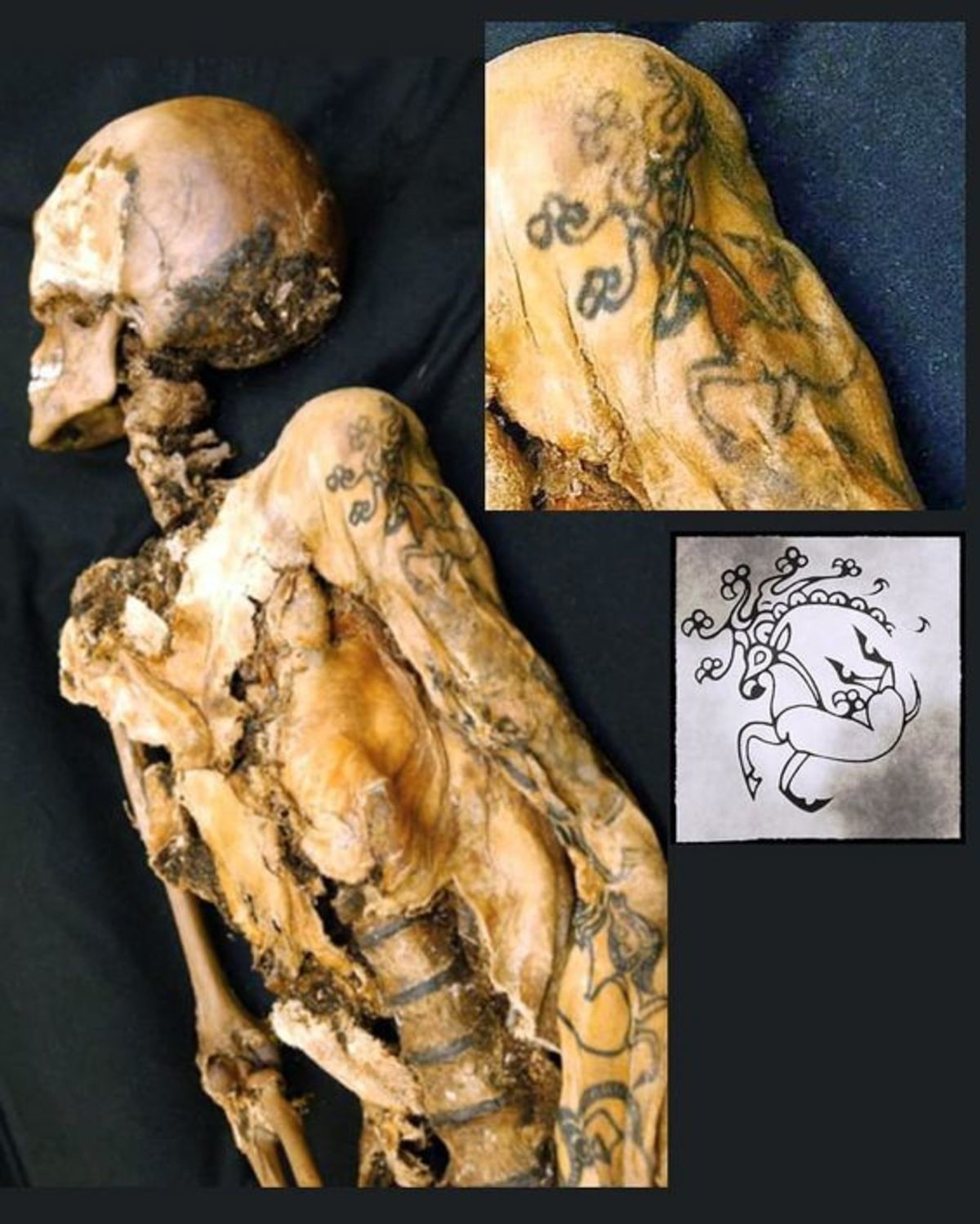"""Mummy Has A Tattoo. The Mummy of a Ukok Princess, a woman who lived in Siberia at least five centuries BCE... """"That tattoo wont look so good when you're old."""""""