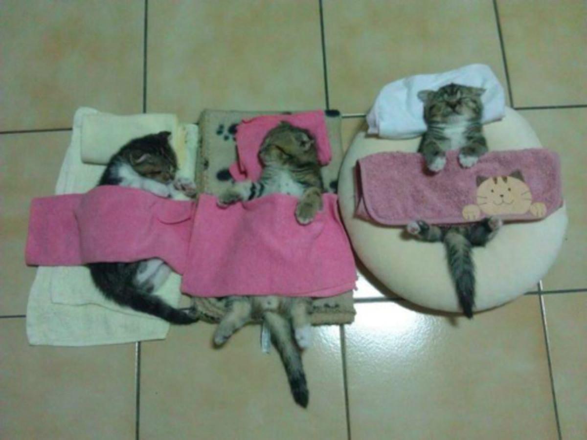 Nap time!. .. Awwwwwww. Gimme the kittens!