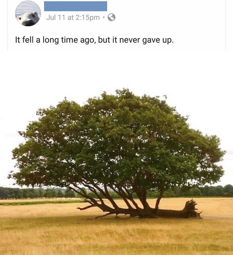 Never give up. .. Growing wide is beneficial to a tree in an open space. This boy getting hella gains.