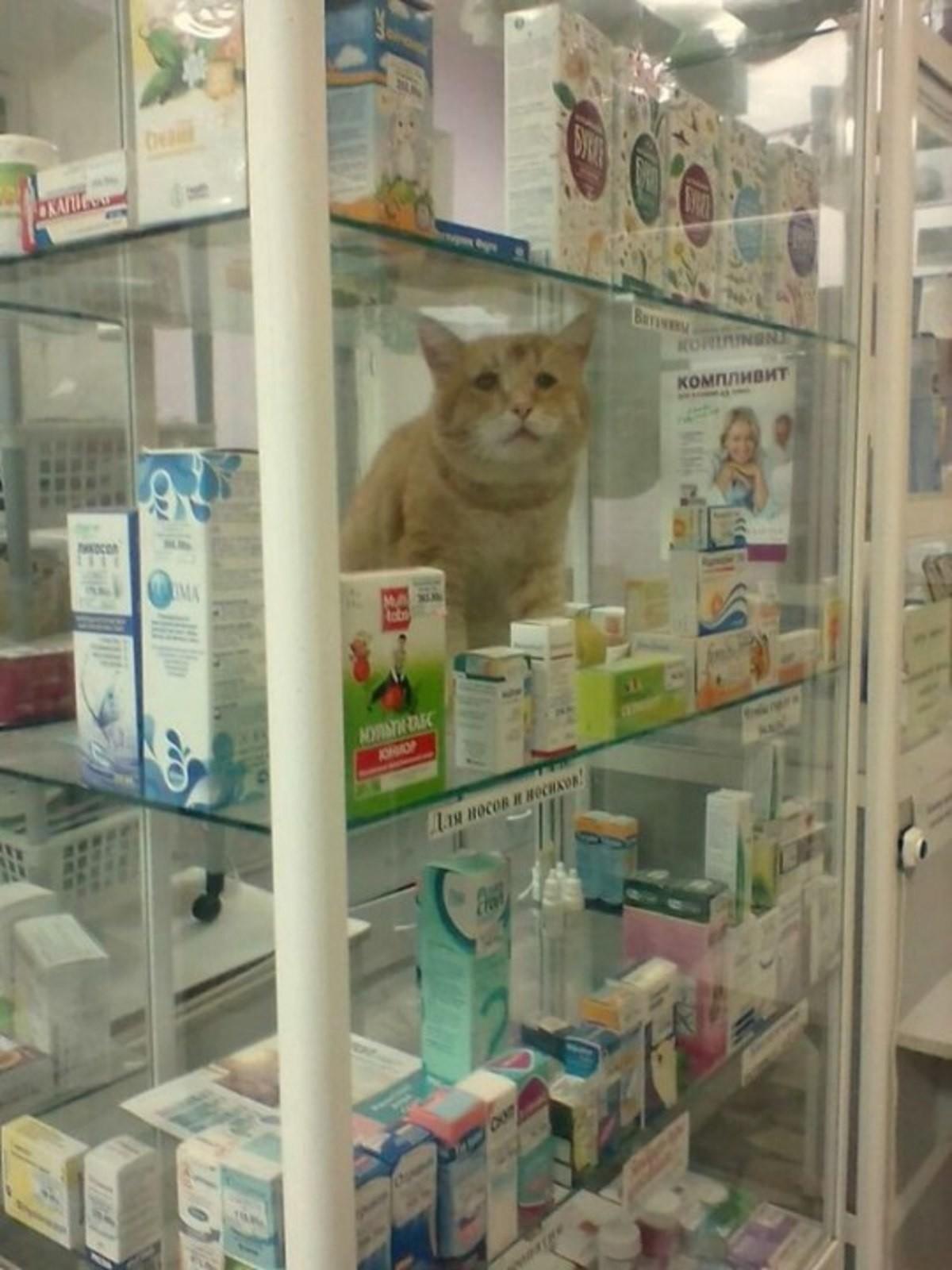 New Antidepressant hits pharmacy shelves. Это такой новый вид антидепрессантов?.. That cat looks pretty depressed though.