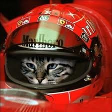 New Ferrari Driver Announced. I don't usually post cats, but I couldn't resist this time.