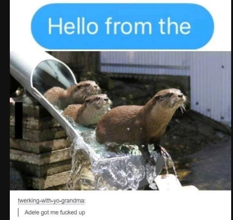 otters. .