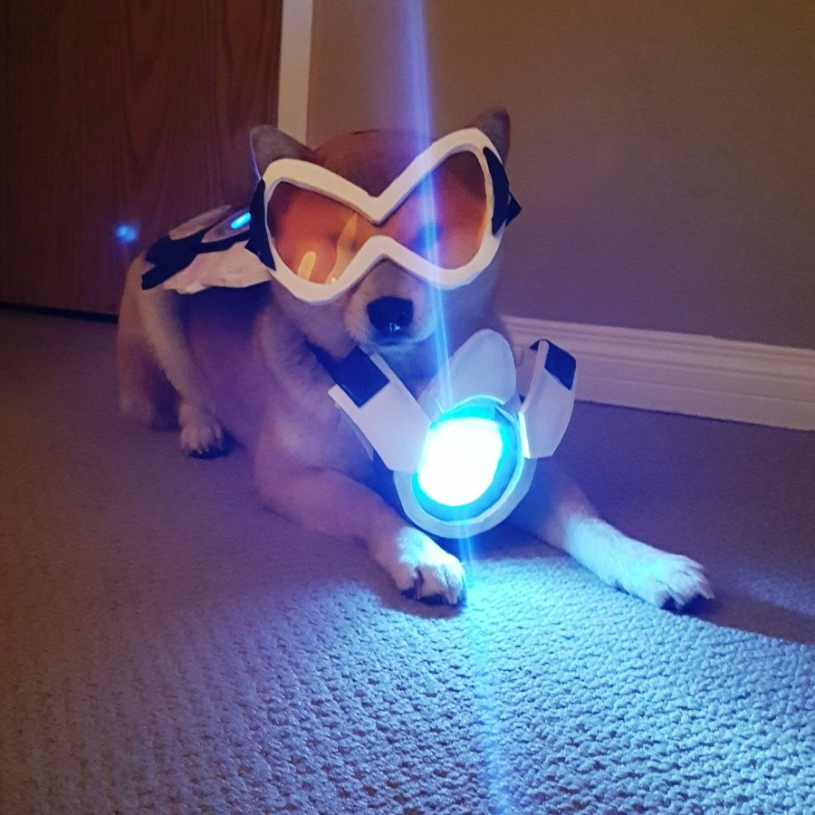 Overwatch Doge Cosplay. .. thats a well trained dog if its not going to chow down on that gremlin food.