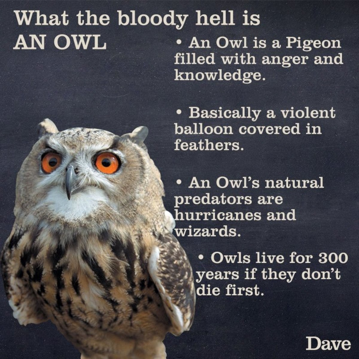 Owls. .. Owls are much much more beautiful than pigeons. My cats would be pissed I said that, everytime they see even a medium sized they are like