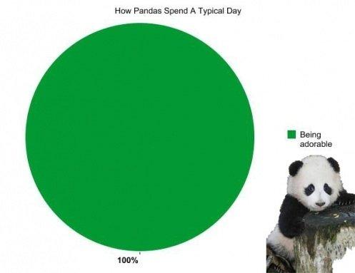 Pandas. . Hagan Pandas Upand A Typical Day. oh rly