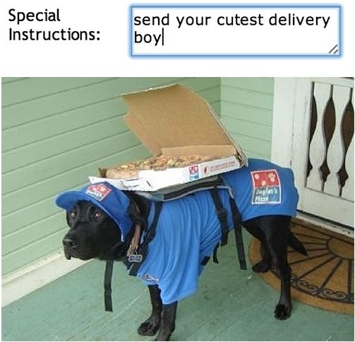 Pizza Delivery. The domestic dog (Canis lupus familiaris, or Canis familiaris) is a member of the Canidae family of the mammalian order Carnivora. The ter