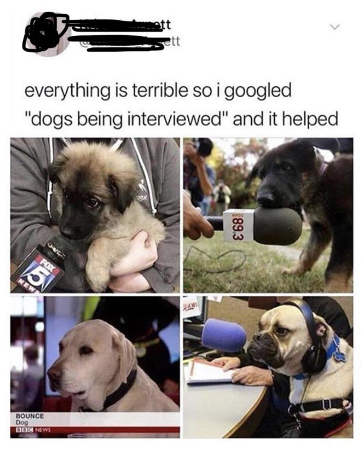 Puppies. Don't bottle up your emotions, it's okay to be stressed and angry once in a while.. Not forgetting that Bounce got a promotion