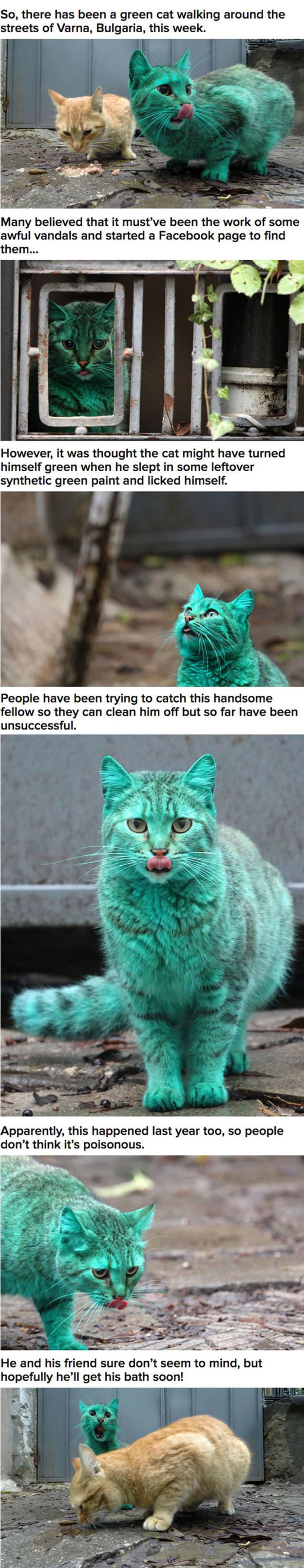 Radioactive Cat. .. Beast Boy back at it again
