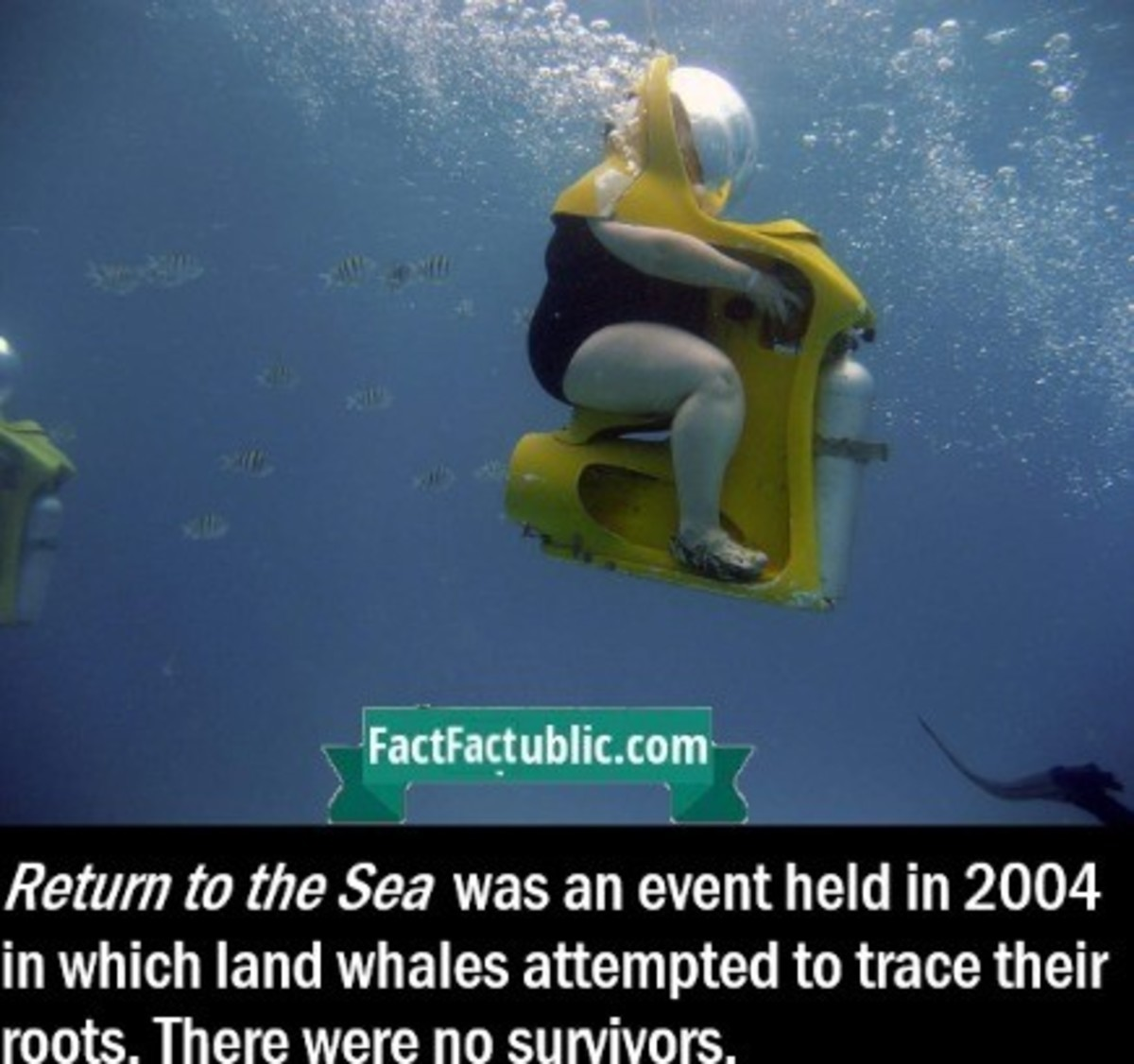 Sad Fact. A fifth of them were killed accidentally by Japanese whaling fleets... That image alone of a fat woman on an underwater bike was enough to make me laugh