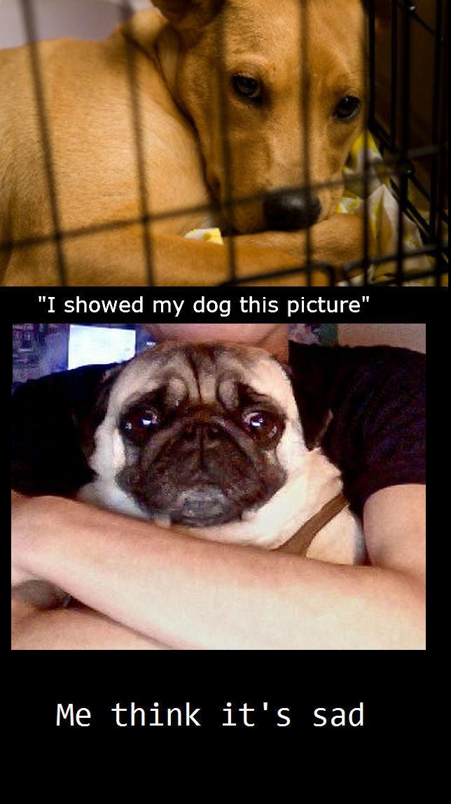 Sad dog meme. Sad dog. Me think it' s sad