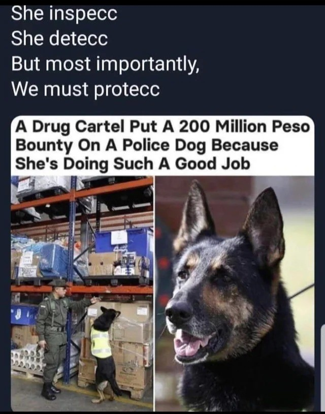SAVE HER. .. 200million peso? Nobody gunna hurt a dog for a £30 bounty lmao