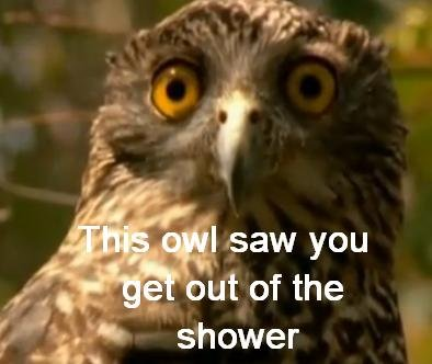 Shocked Owl is Shocked. OC.