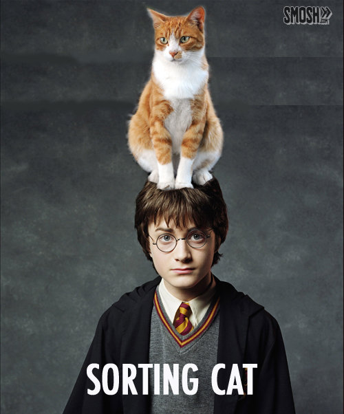 Sorting Hat , How about. oh the pun. SORTING thf
