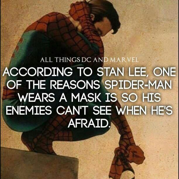 Spider comp. .