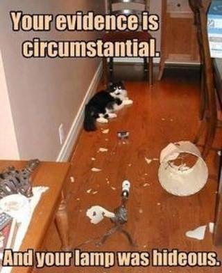 Sure, blame the cat.. . Imu-. First