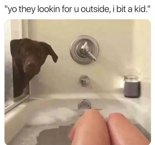 tet. .. That's not a pitbull